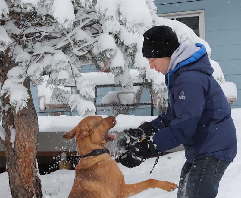 wild-dog-snow